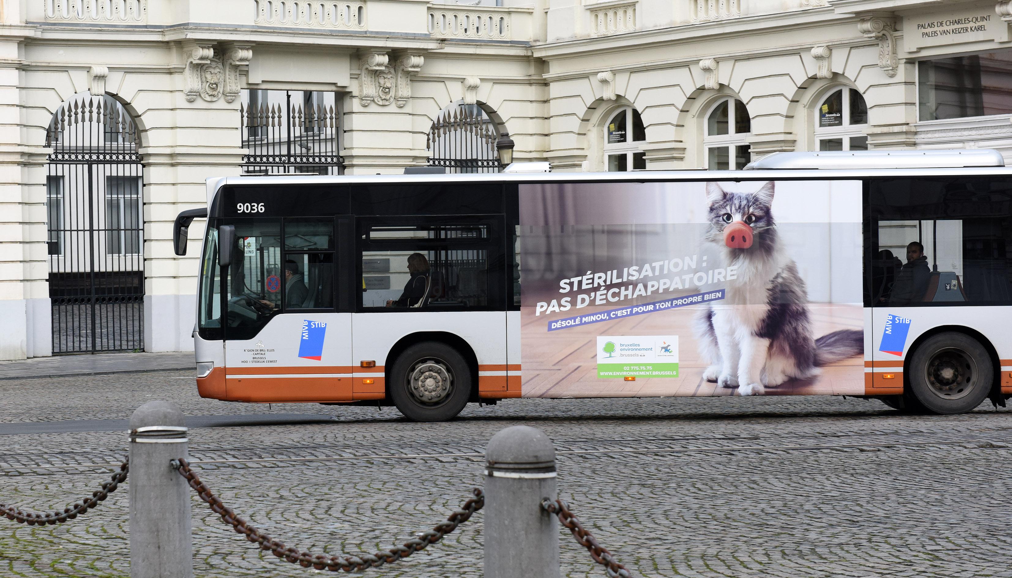 Animal Welfare Brussels (sterilisation campaign) - Vidéo