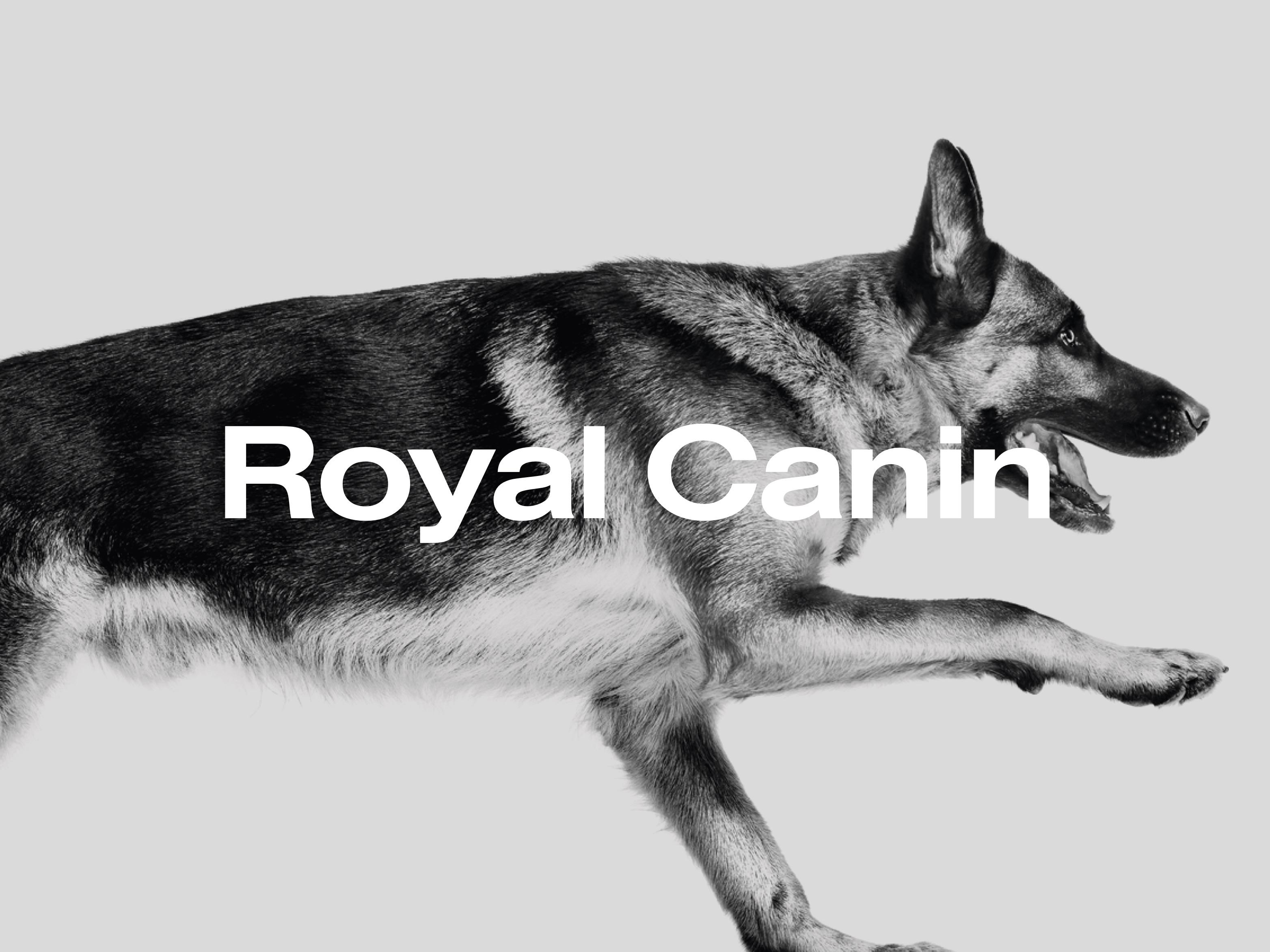 Royal Canin Belgium - Création de site internet