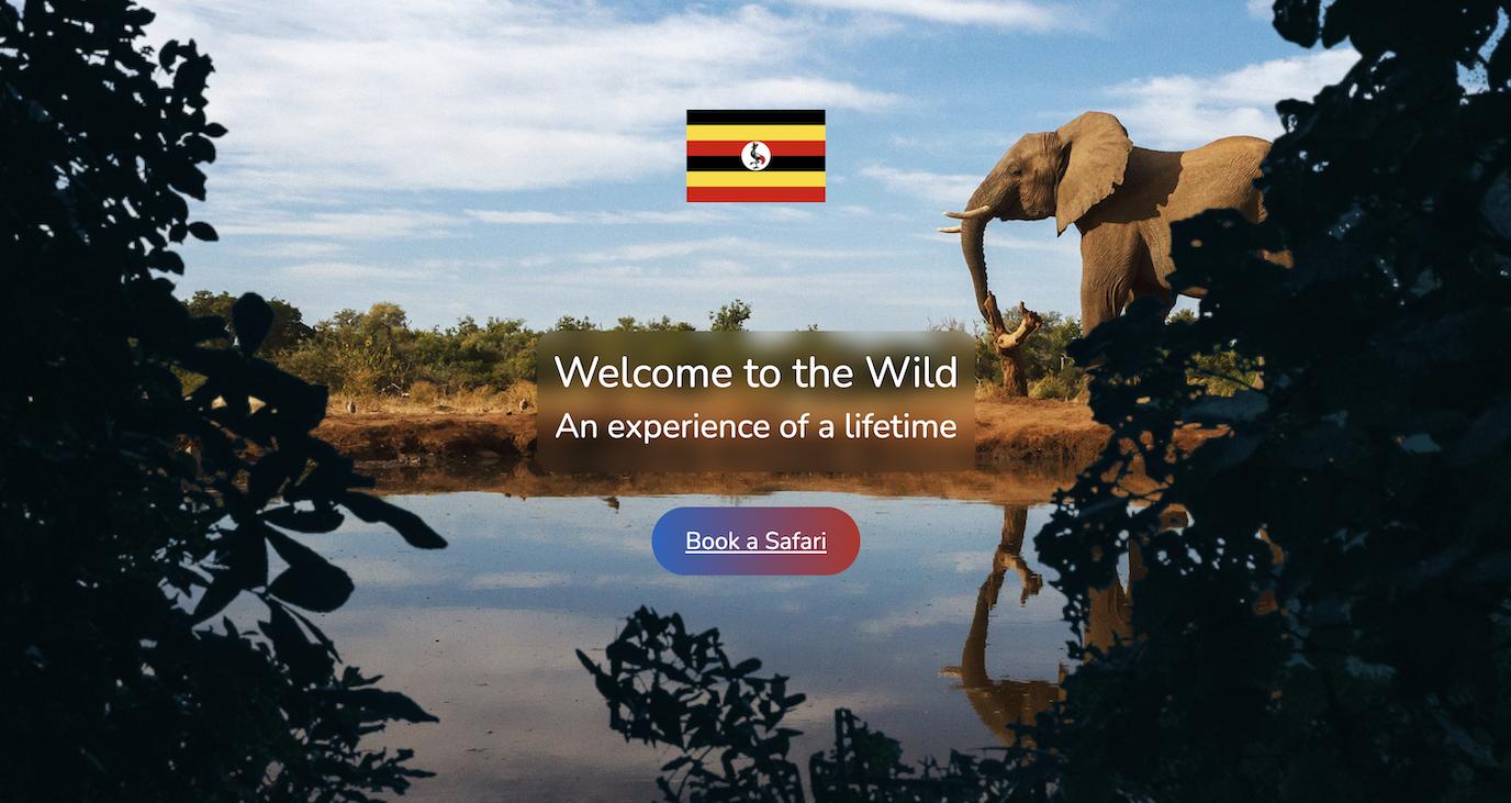 Travel agency website - Website Creation